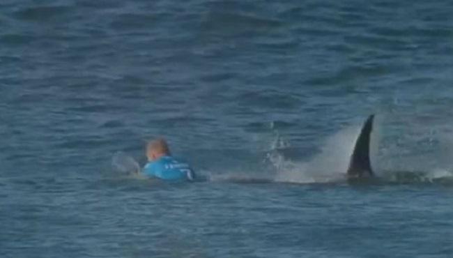 Fanning shark attack_193266