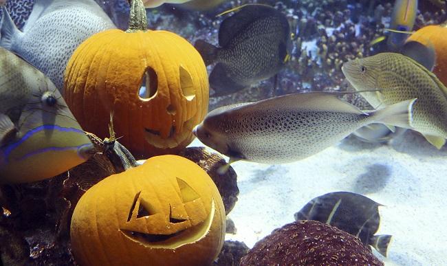 Underwater Jack O Lanterns_223090