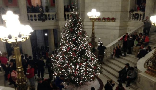 christmas tree steve_233472