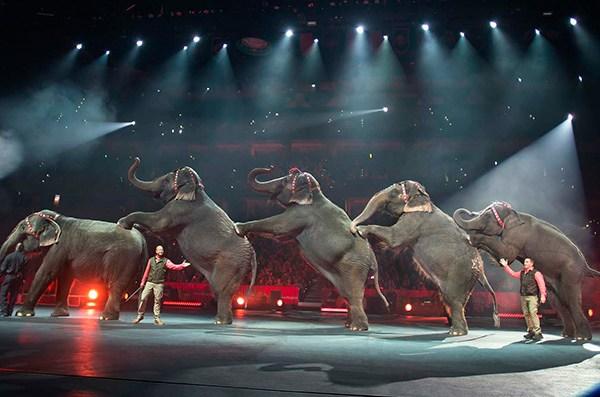 ringling bros elephants_152012