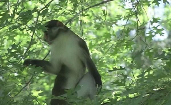 Dizzy the monkey_321187
