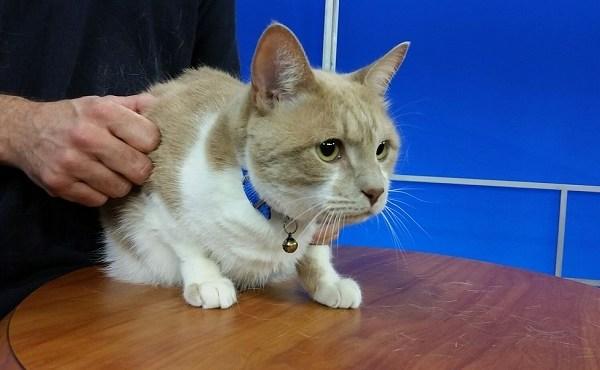 Rescue a Pet 6-22 Milo 650x370 (2)_320226