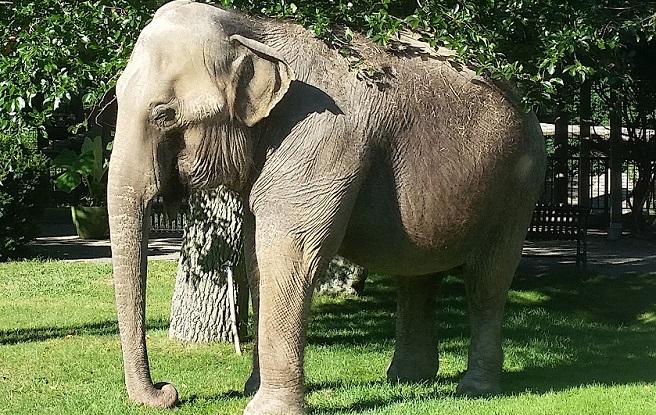 buttonwood park zoo elephant Ruth_332901