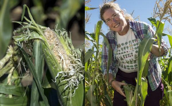 uri-rebecca-brown-corn-crop-protection_350203