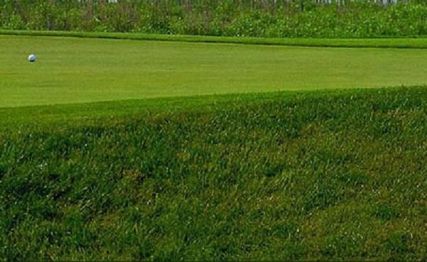 Generic golf_365491