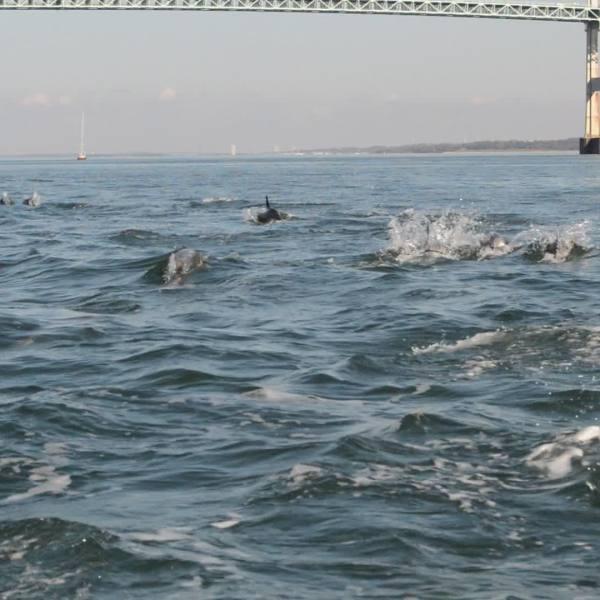 narragansett-bay-dolphins_372183