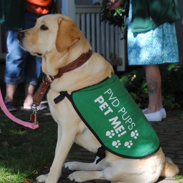PVD Pups 3_347098