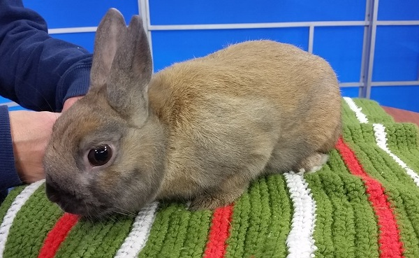 peanut-the-rabbit_395400