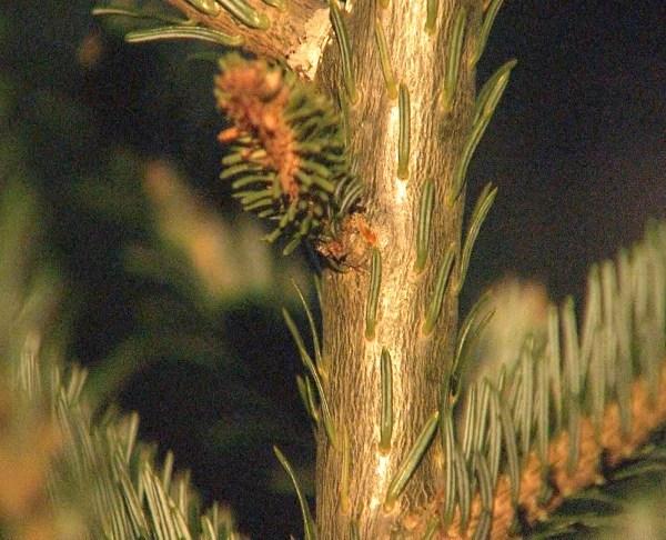 xmas-tree-bugs_394926