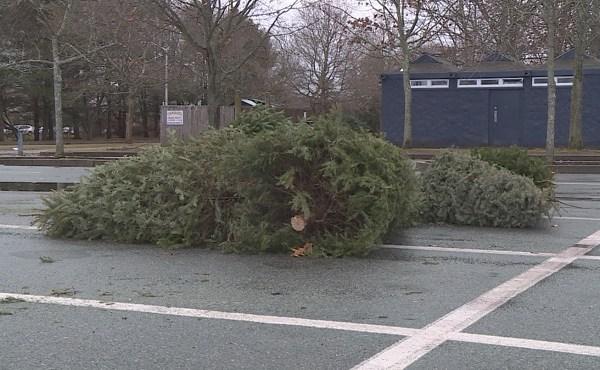 Christmas tree recycling_399964