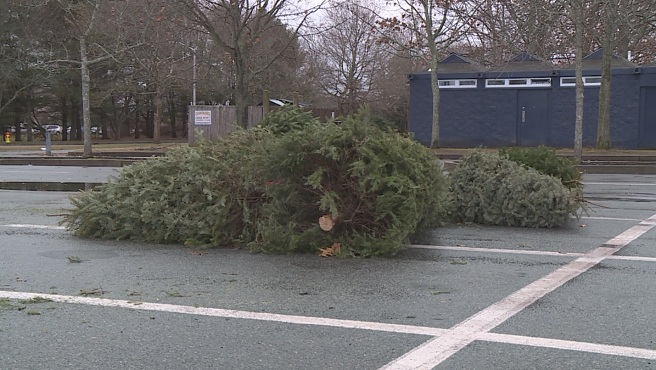 Christmas tree recycling_399964