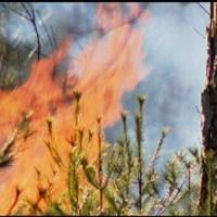 swansea brush fire_437259