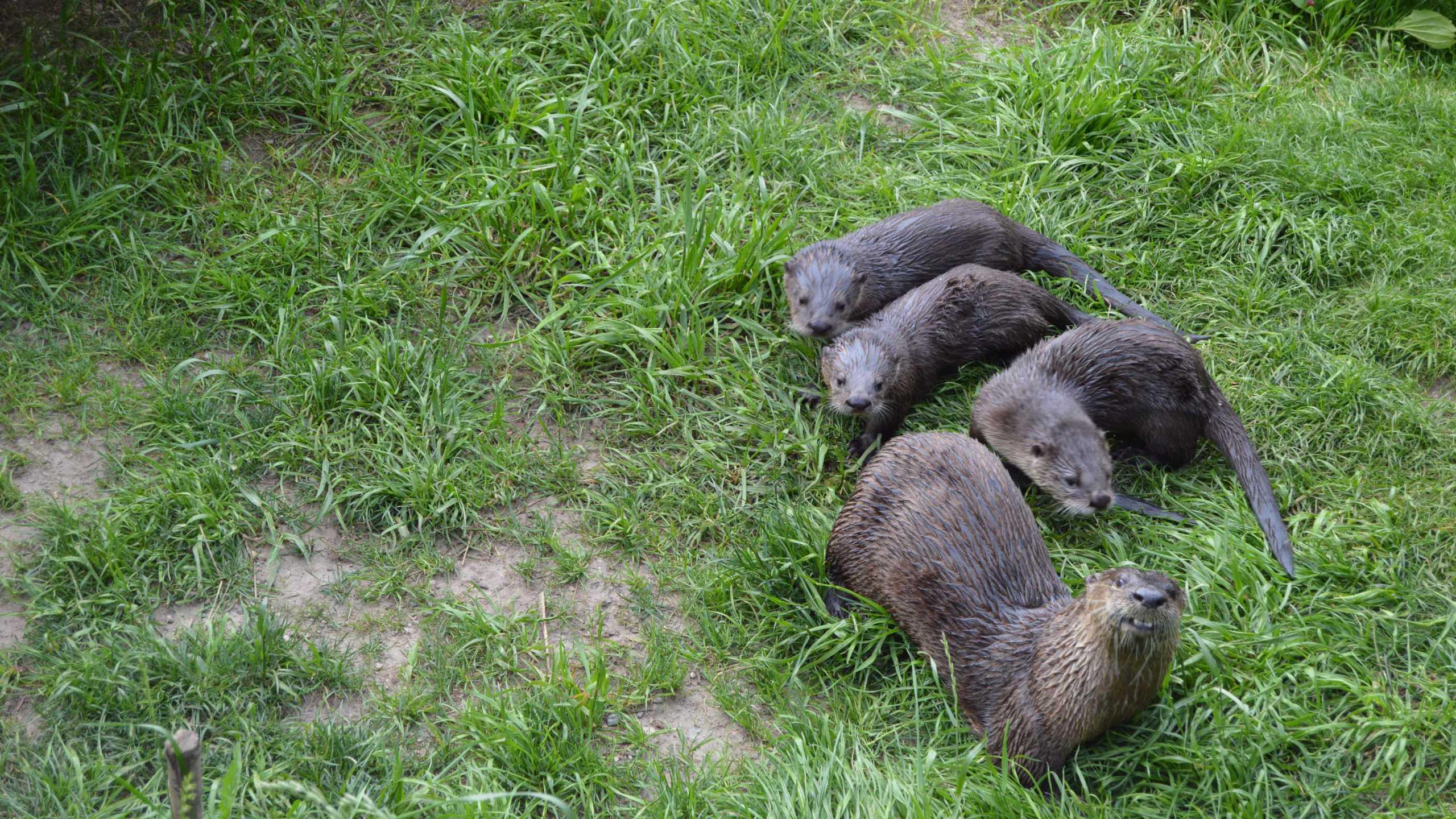 otter family_502244