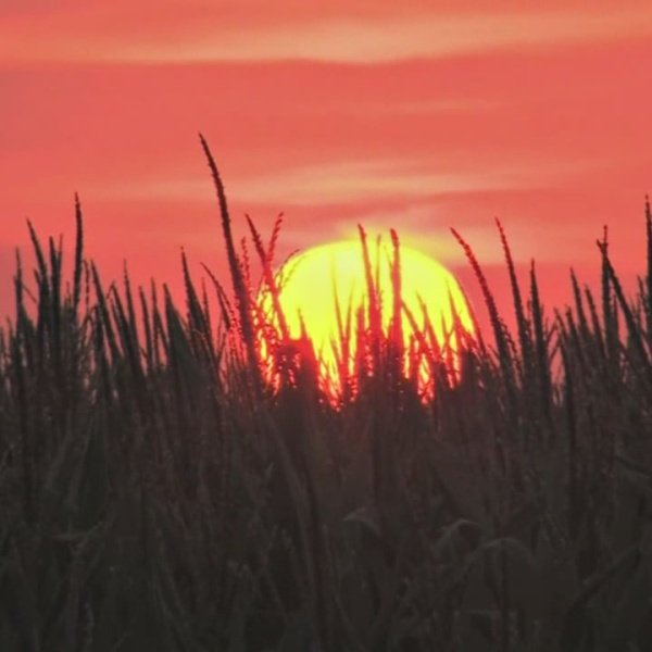 Standards for Issuing Heat Advisories Updated