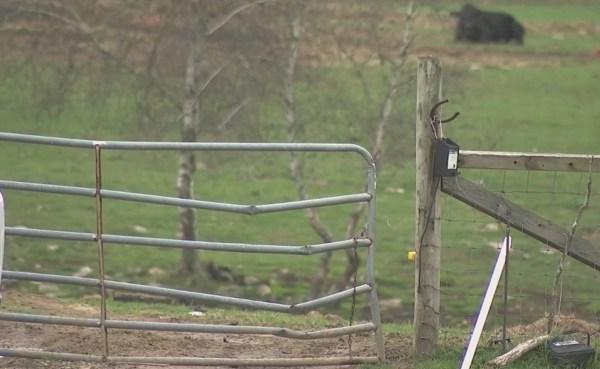 Westport farm under scrutiny_465832