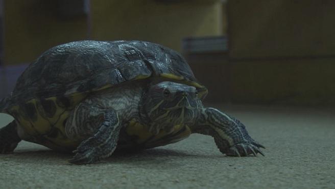Turtle_542856