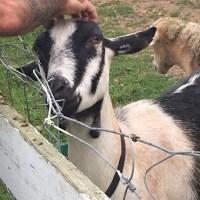 westport-animals-survivors_528322