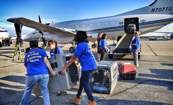 Animals rescued after Hurricane Harvey_547570