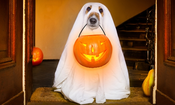 Halloween Ghost Dog Trick Or Treat_577862
