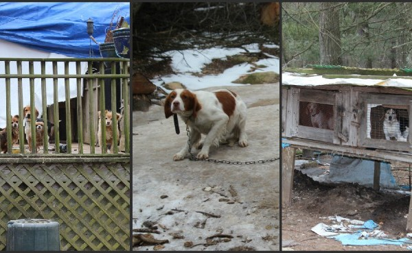 Dogs seized in Exeter animal cruelty investigation_612878