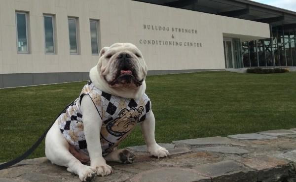 tupper bryant bulldog mascot_601818