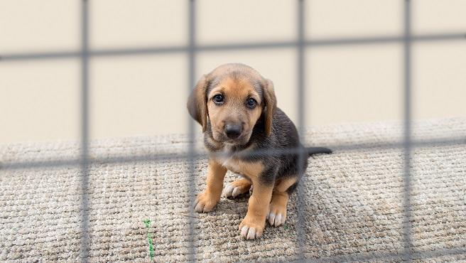 sad puppy in a kennel_628943