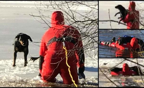 Blackstone Dog rescue_646932