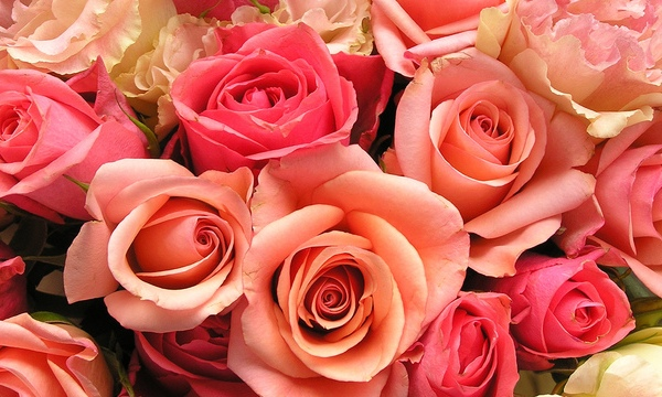 roses-flowers-valentines-day_1517879321399_340223_ver1-0_33247436_ver1-0_640_360_637873