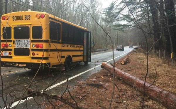 bus vs tree_654373