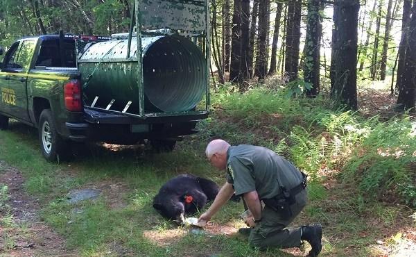 ridem-black-bear-june-12-2016_1522176532733.jpg