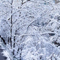 sxc-winter-weather-scene_1521138487719.jpg