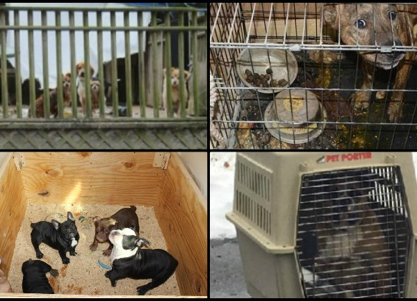 Animal hoarding cases collage 2018