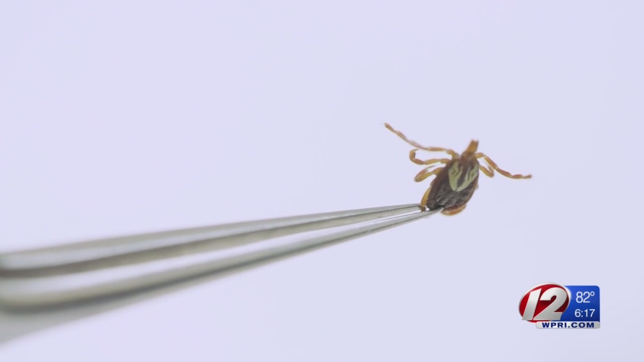 CDC_warns_of_uptick_in_insect__carried_d_0_20180502225913