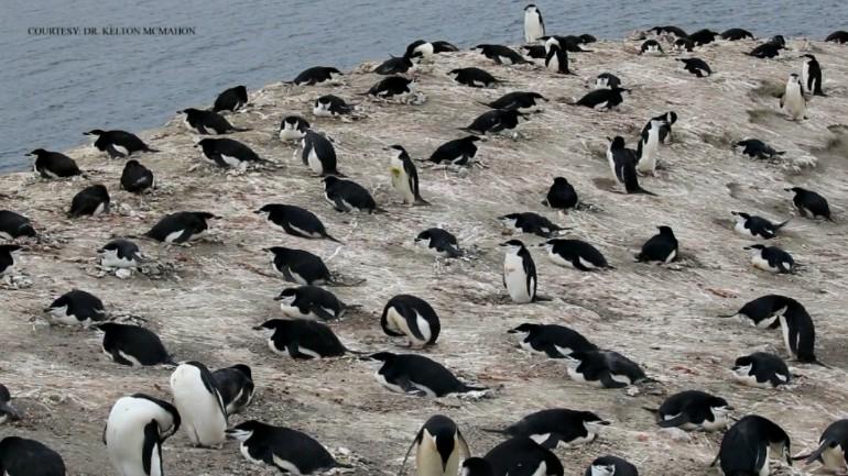 URI penguins_1525901715634.jpg.jpg