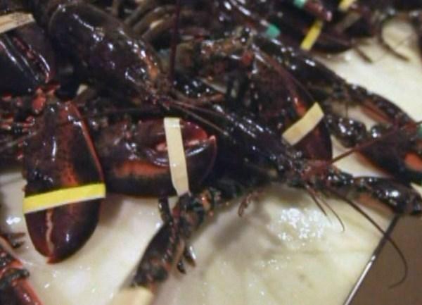 lobster_1524525979340.jpg