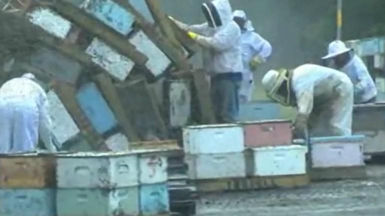 Bees_1527881360545.jpg