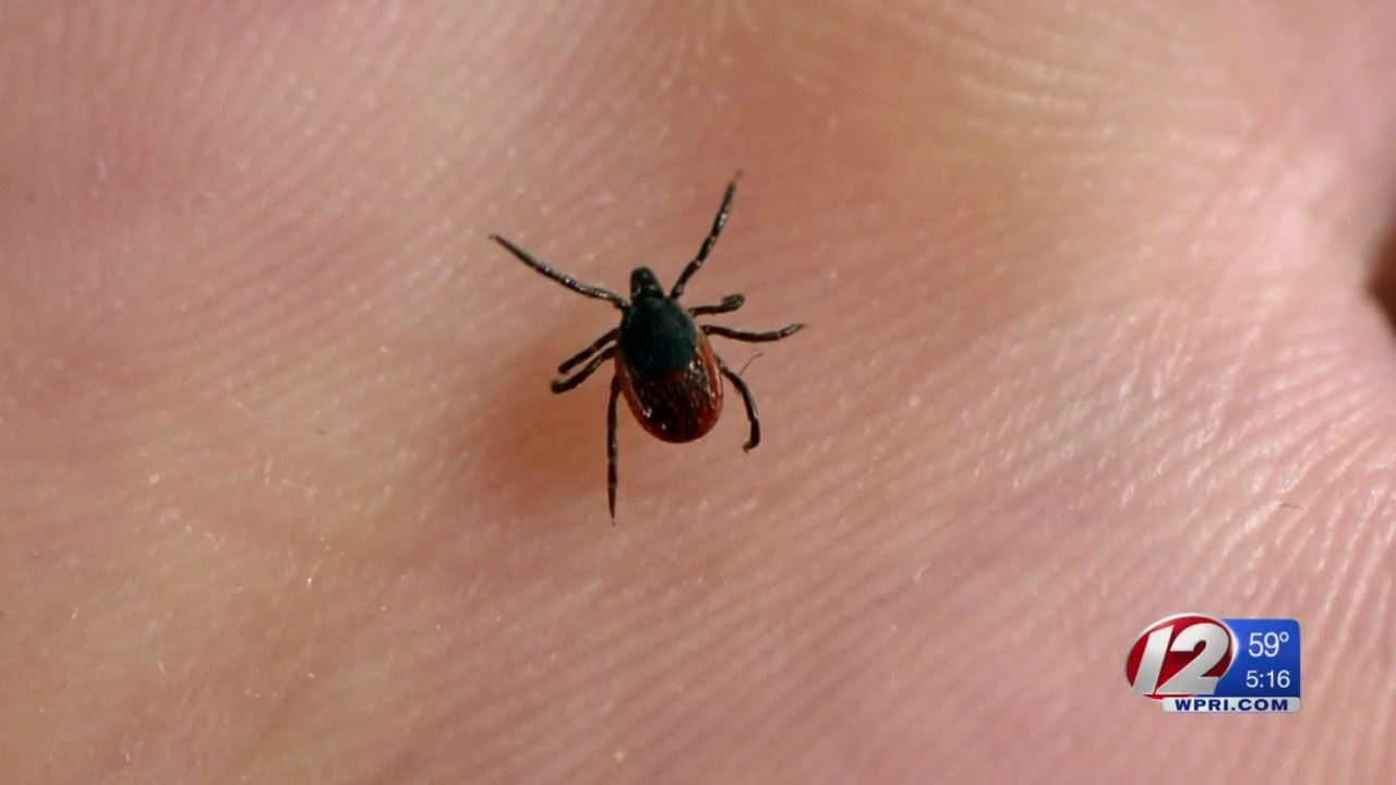 Repel, check, remove: Officials warn of increase in Lyme Disease cases