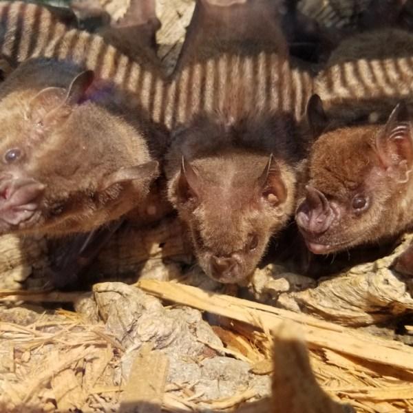 RWZ Bats 2_1530550372432.jpg.jpg