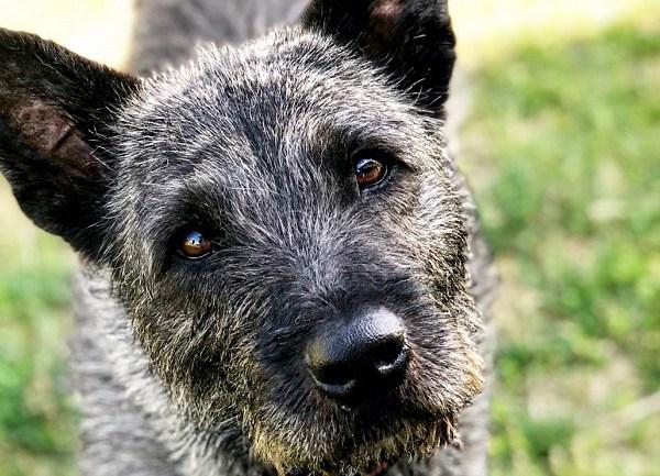bella fairhaven dog abuse_1531164040121.jpg.jpg