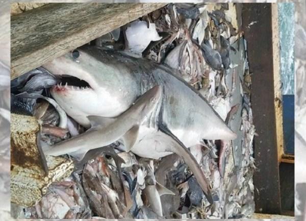 shark_1532977974468.jpg