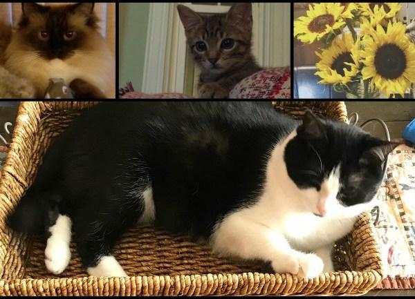 Cat day collage_1533768899111.jpg.jpg