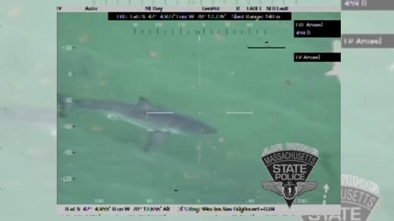 cape cod shark_1534471634929.jpg.jpg