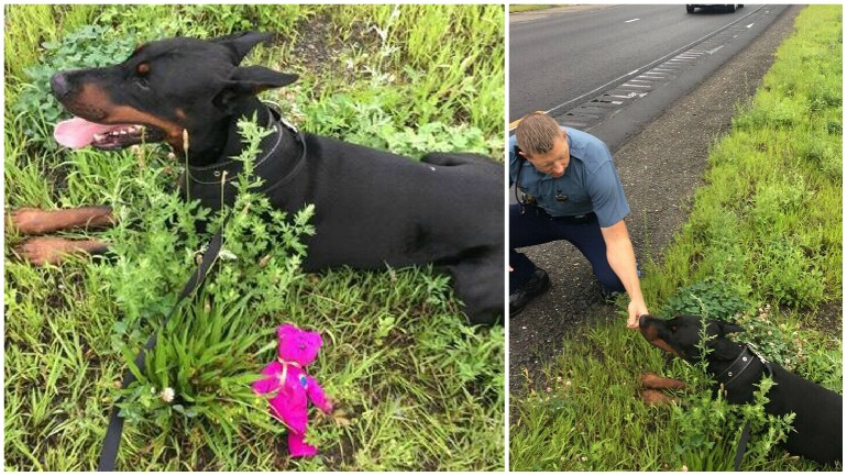 dog lured off highway_1534174111215.jpg.jpg