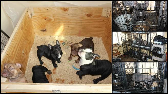 Smithfield Dogs rescued