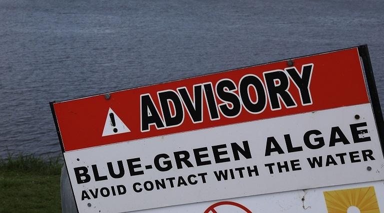 Blue-green algae advisory