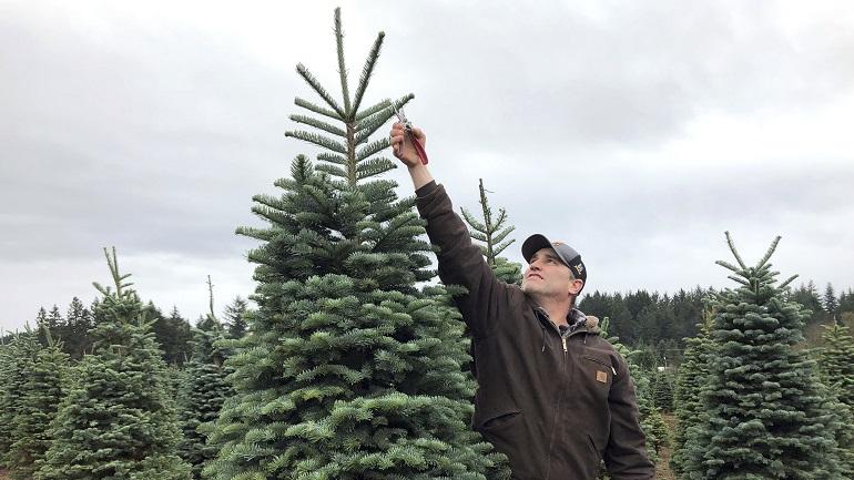 APTOPIX Christmas Tree Debate_1544528688176