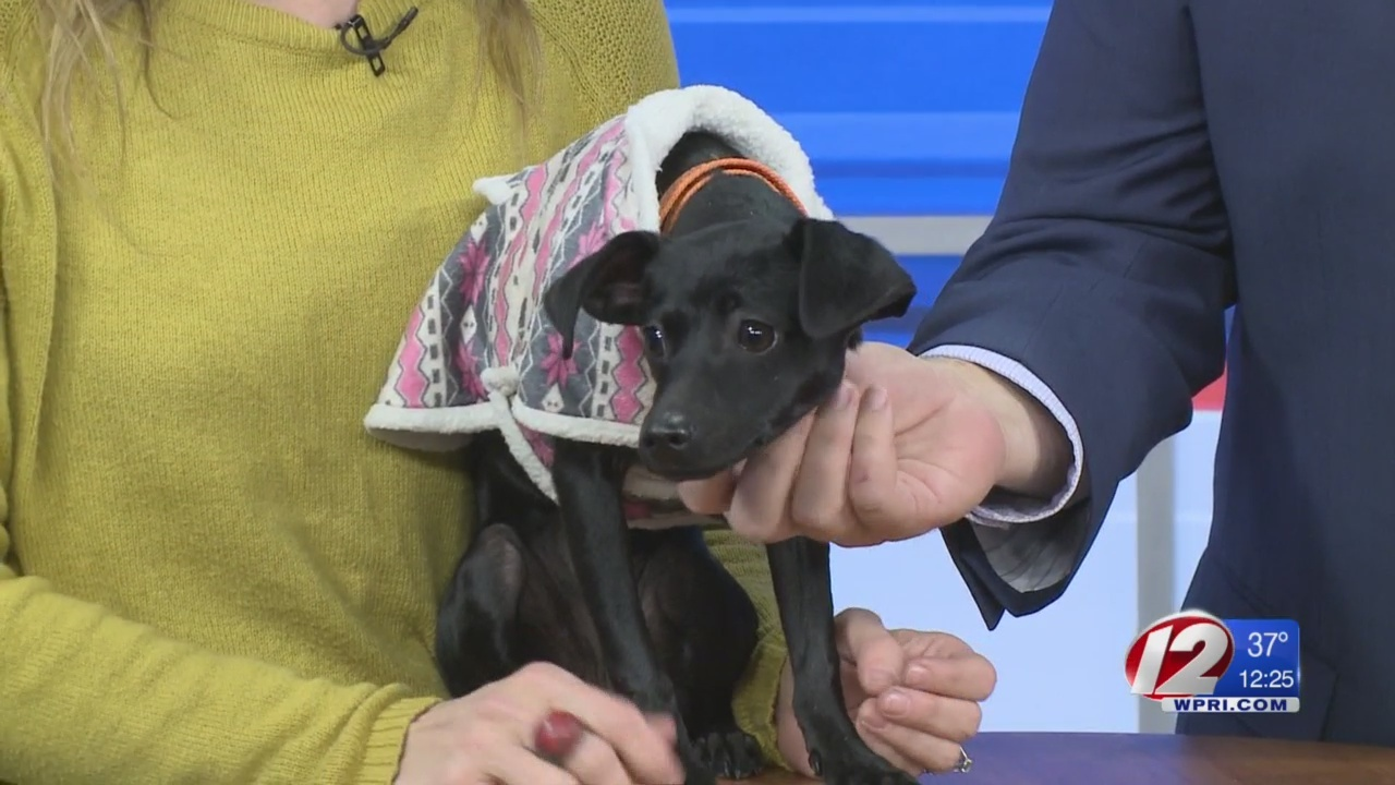 Rescue a Pet: Shelly