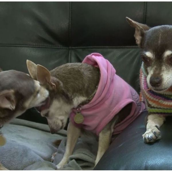 'Vintage Pet Rescue' giving senior dogs new life