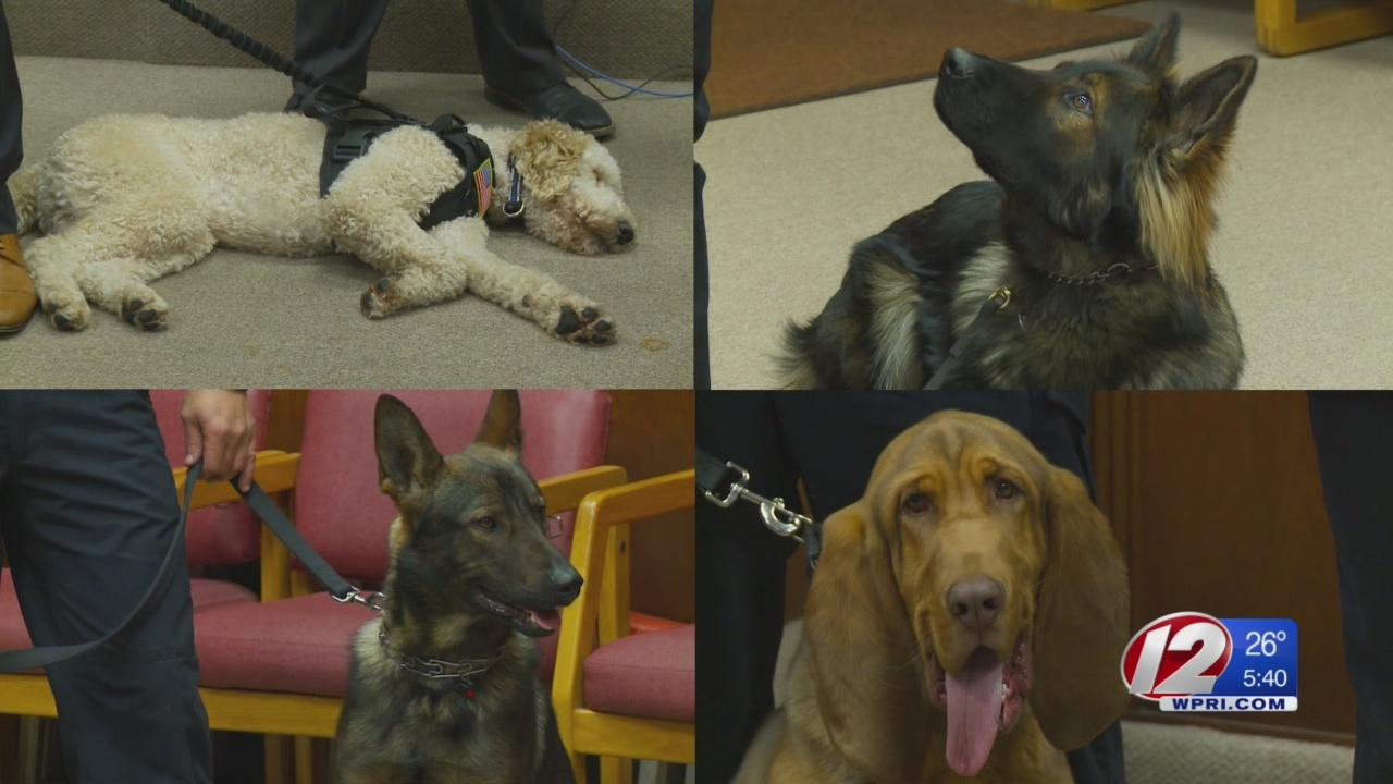 Pawtucket Police introducing new K-9 officers