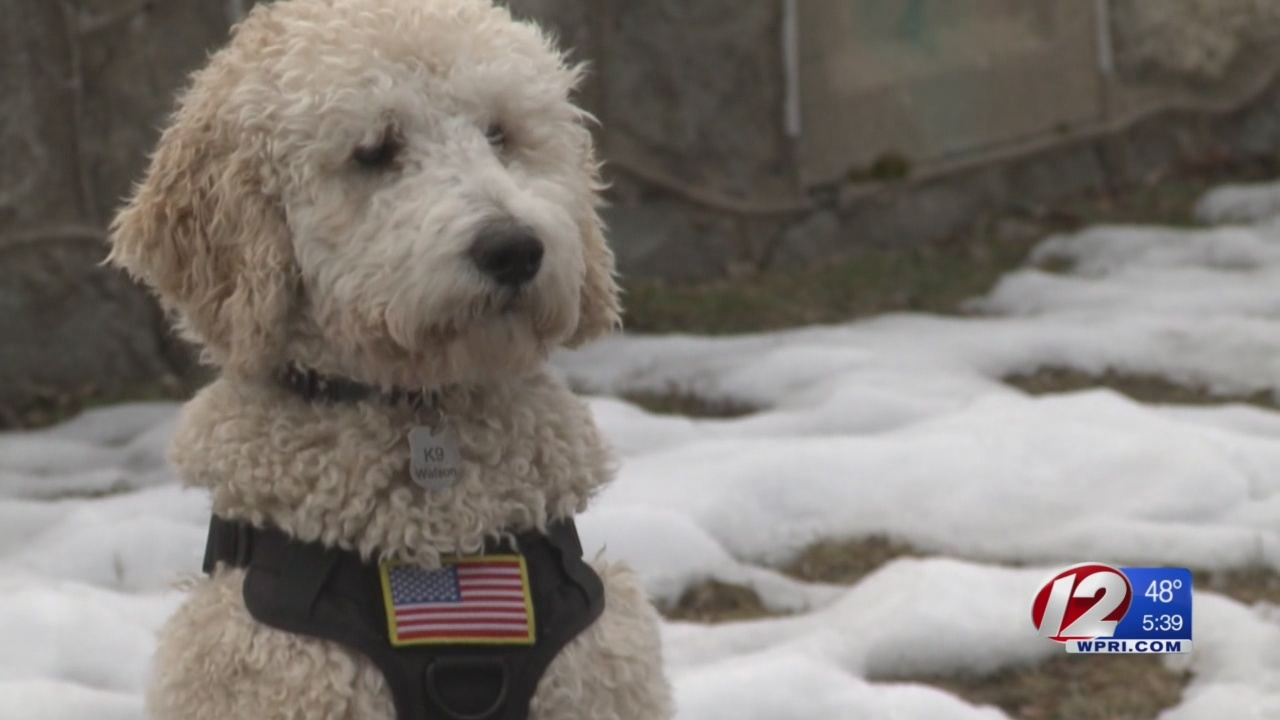 The Pawtucket Police Department is working to increase the safety of the dogs.